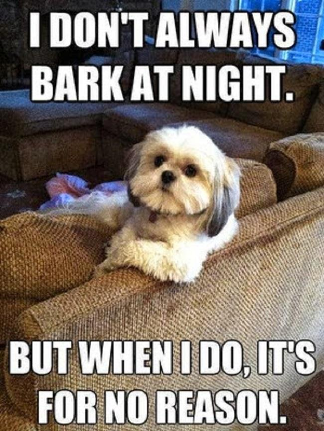 Funny Dog Quotes | Funny Dog Quotes