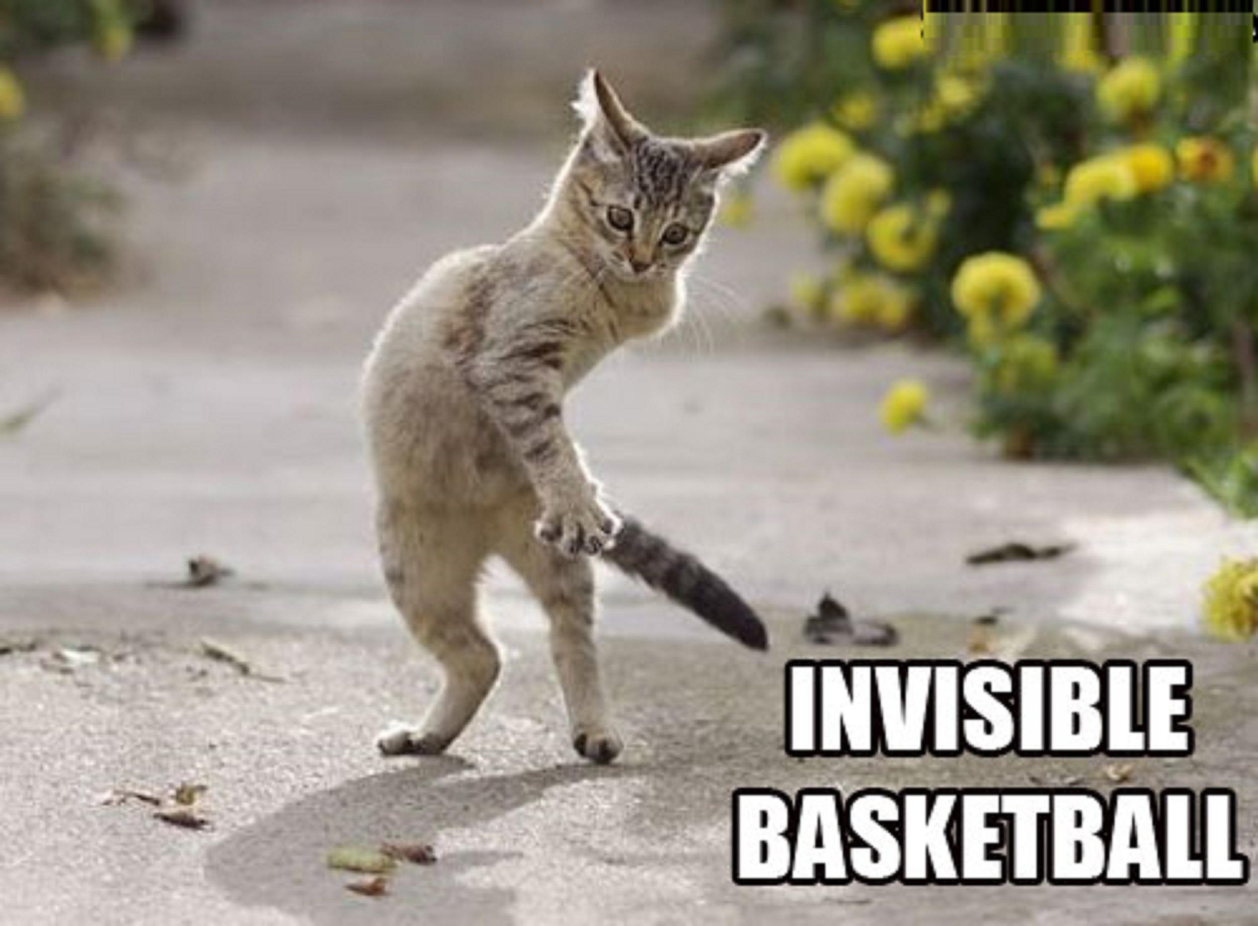 Funny Invisible Cats 4876