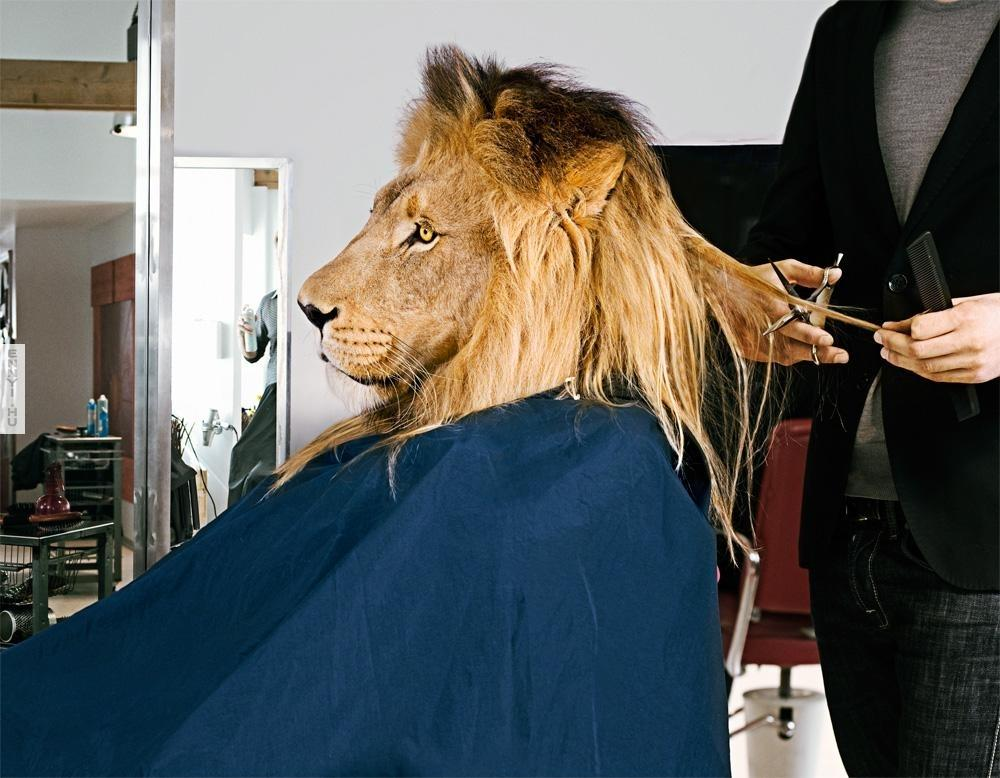 Saloon Cut Outs Funny Lion Hair Cut in Saloon
