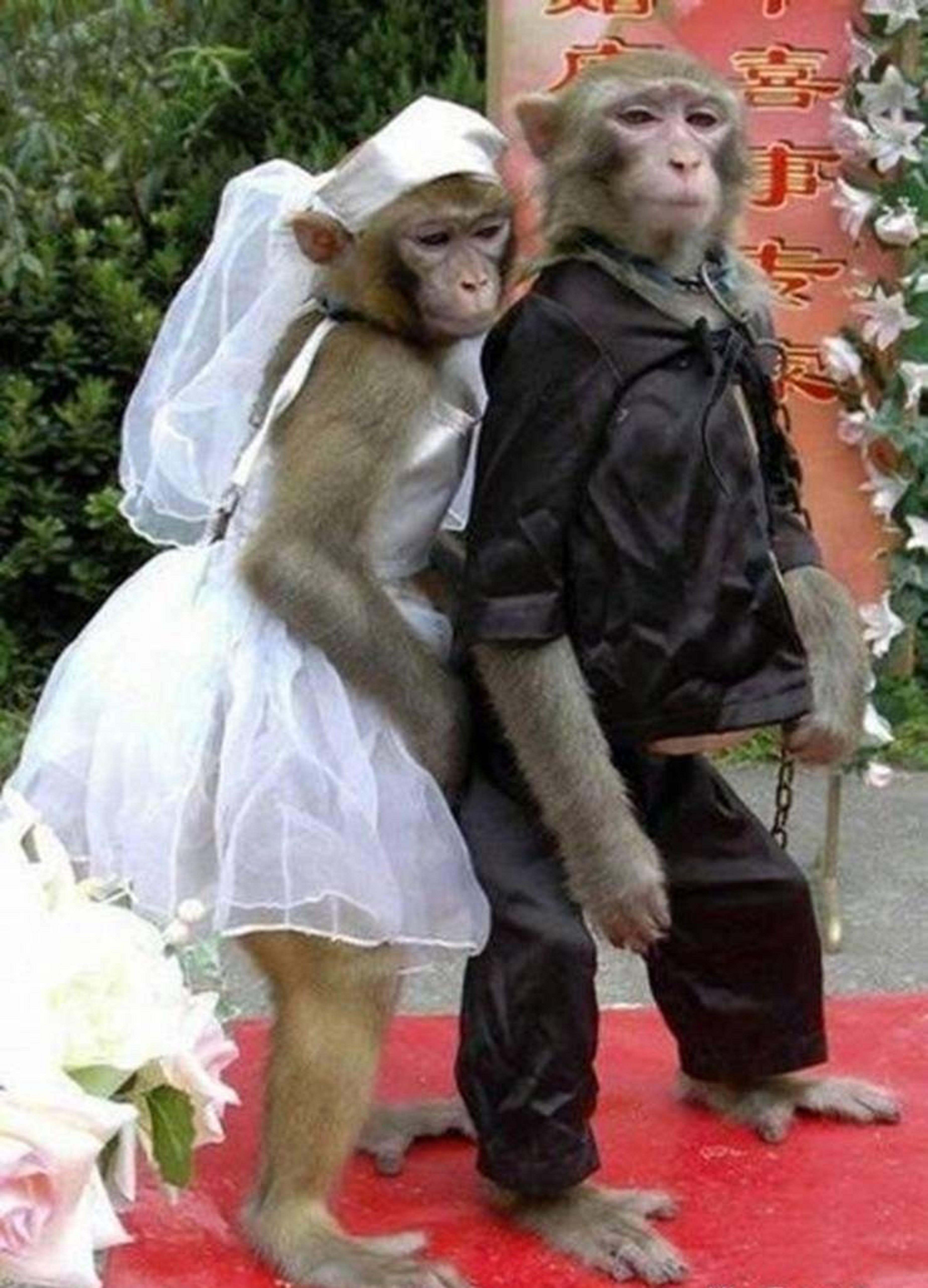 Fun And Easy Psychic Games: Funny Married Couple Monkeys. ...