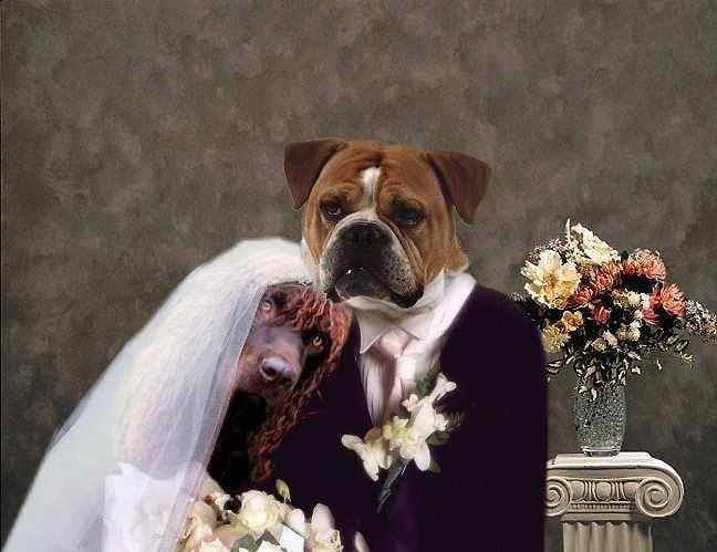 Funny New Married Dogs Couple