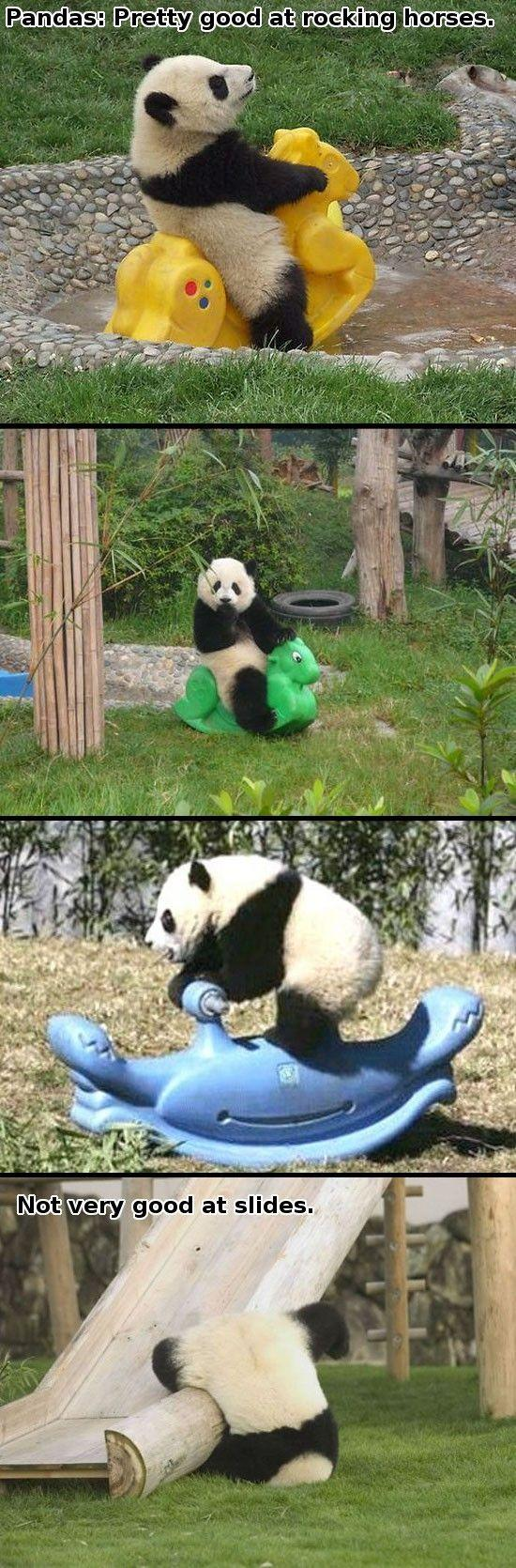 Panda bear funny - photo#28