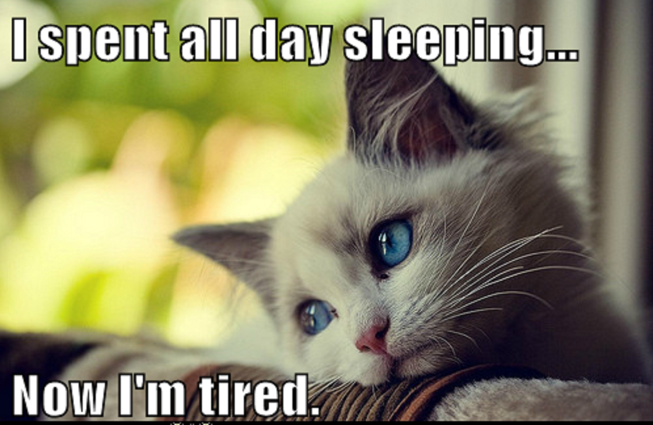 Can T Sleep Funny Meme : Funny pictures animal memes first world cat problems sleep the