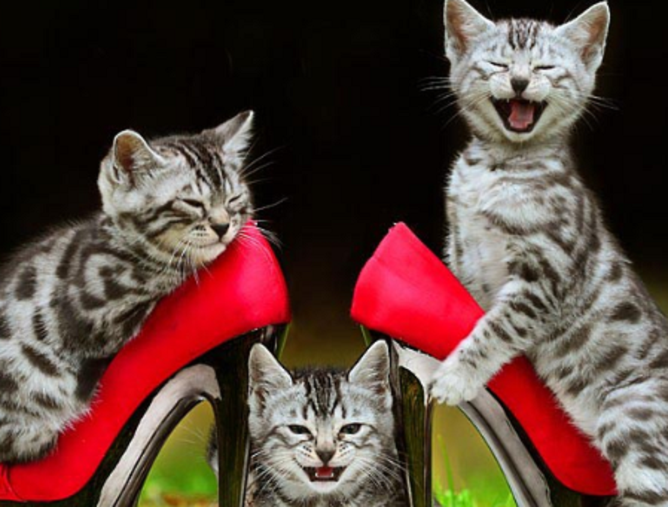 595bca18e6f36 Funny Pictures Of Cute Cats Wearing Red Shoes And Playing