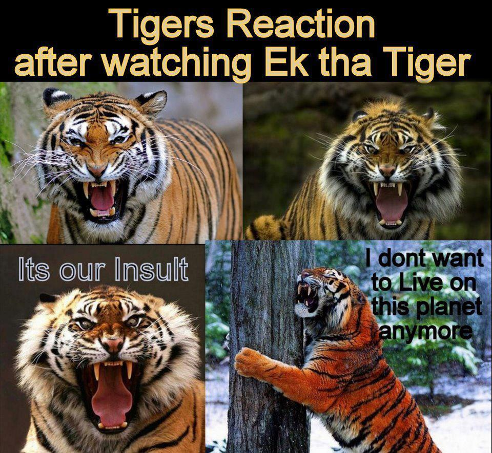 Funny Pictures Tiger Reaction After Watching Ek Tha Tiger