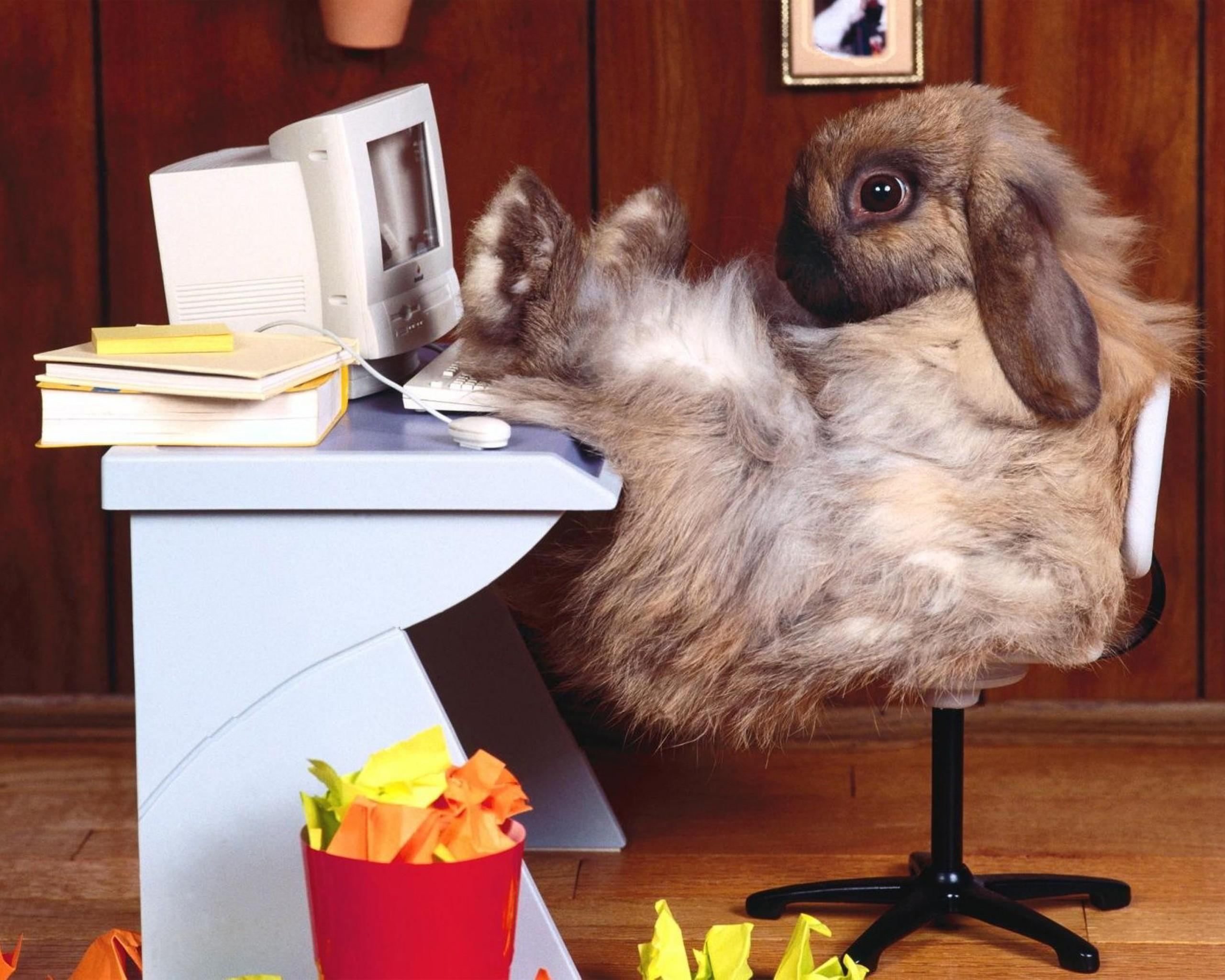 Funny Rabbit Office Picture 4622