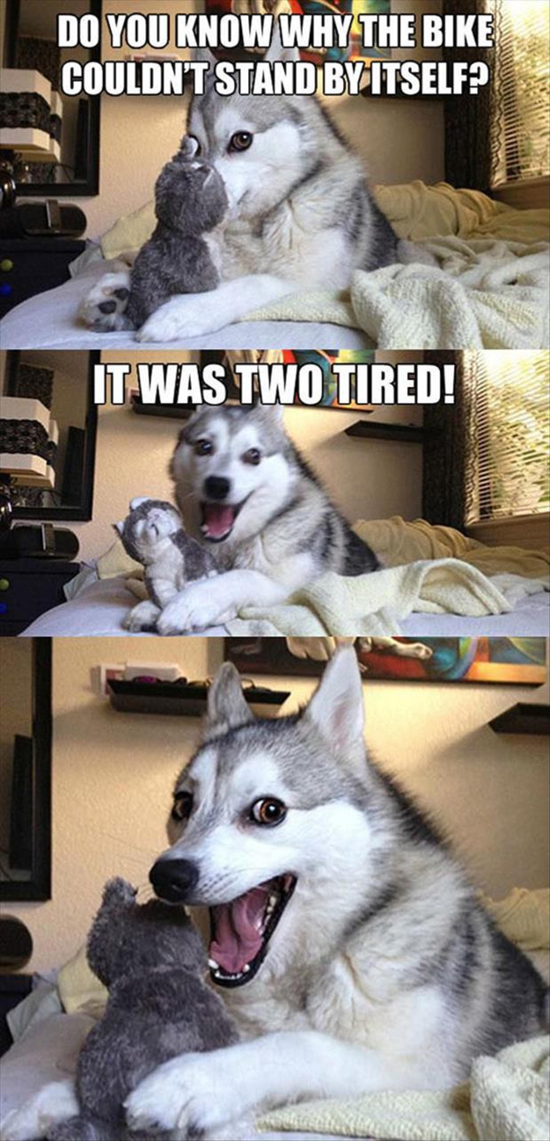 Husky And Dog Faces...Dump A Day Funny Pictures Of The Day Funny Pictures Of Dogs