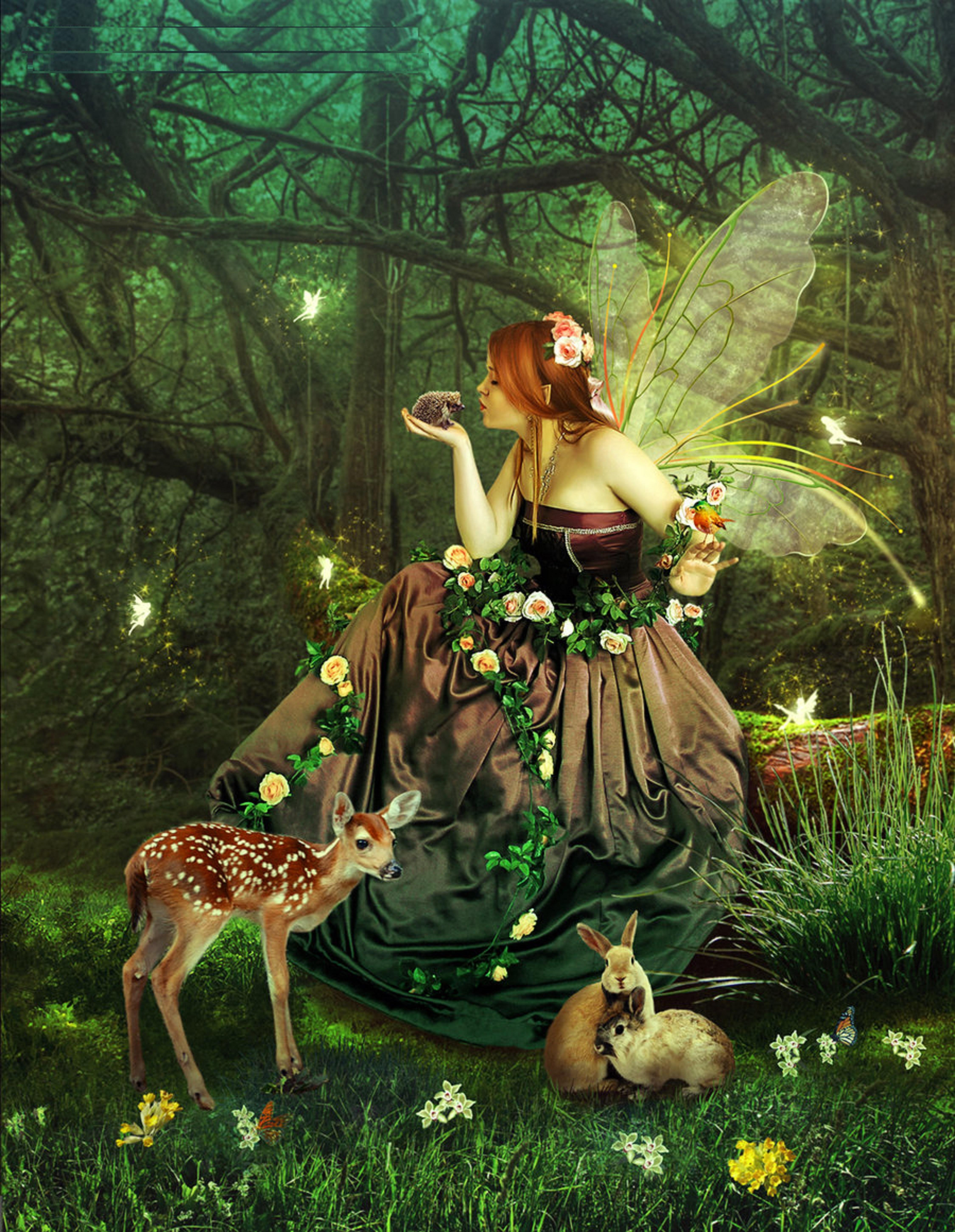 In The Magic Forest Beautiful Fairy Tales Pictures