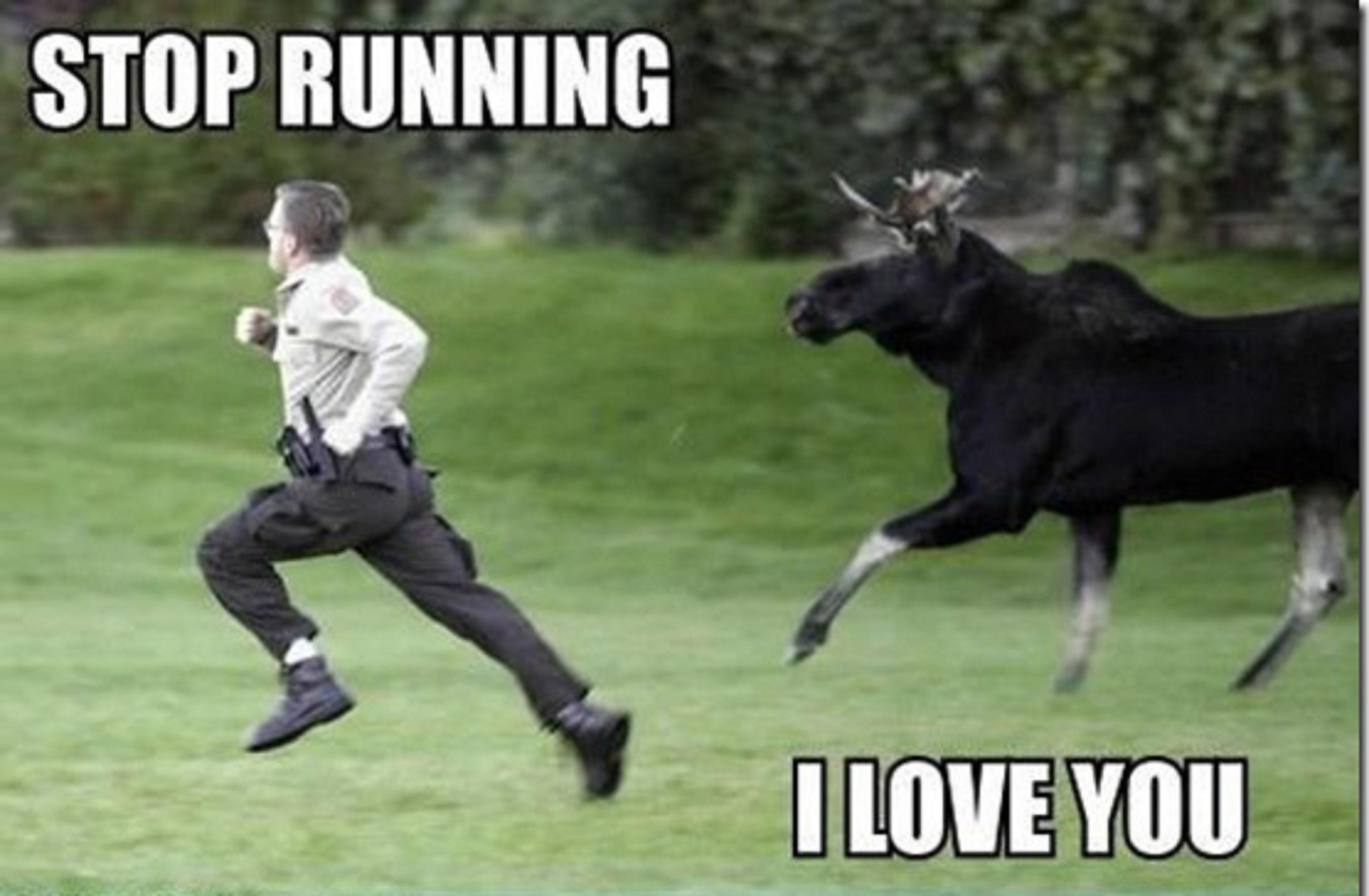 moose-chasing-man-with-the-cap-6377.jpg