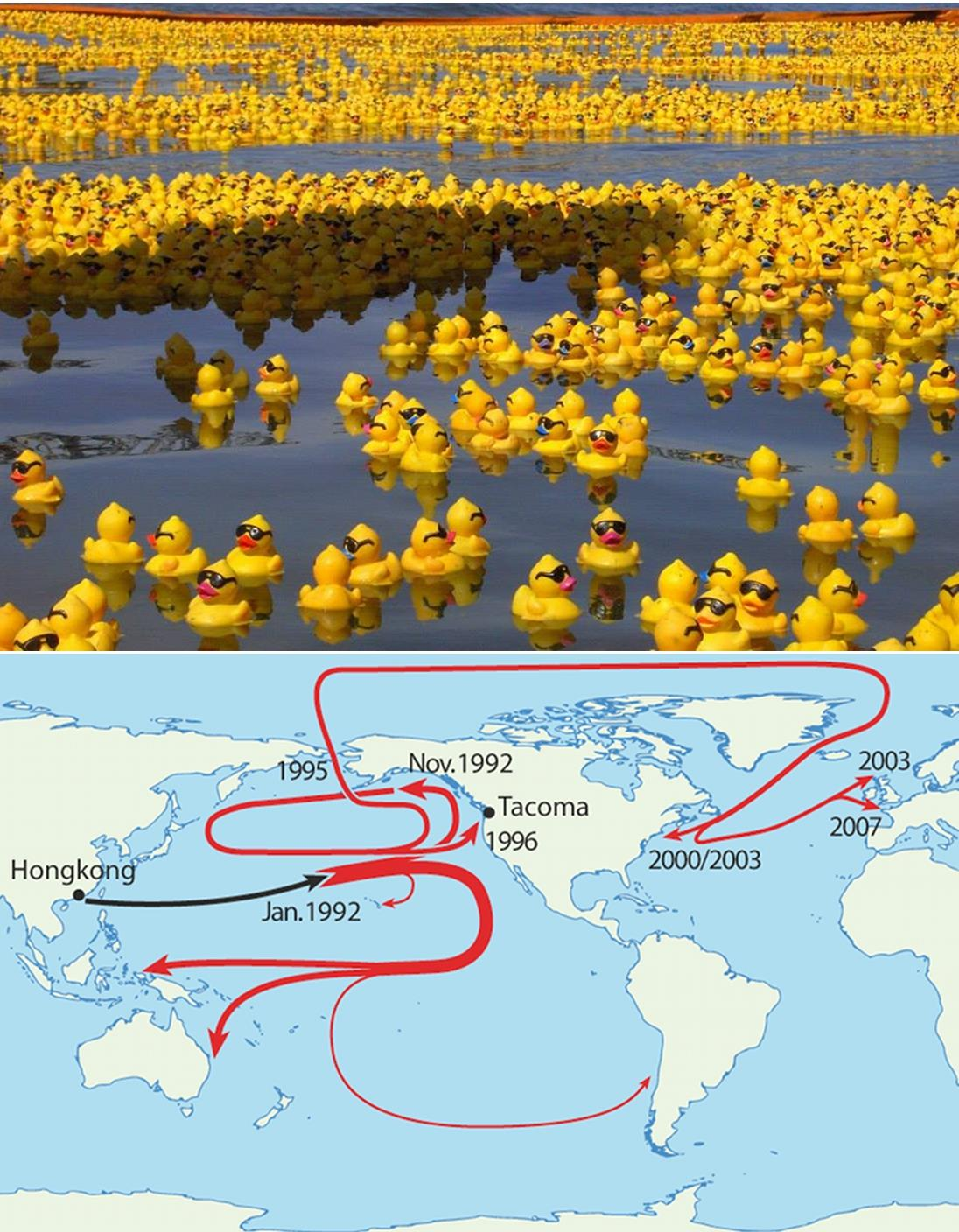 Rubber Ducks Nearly 29 000 Fell Off From Ship Lost In