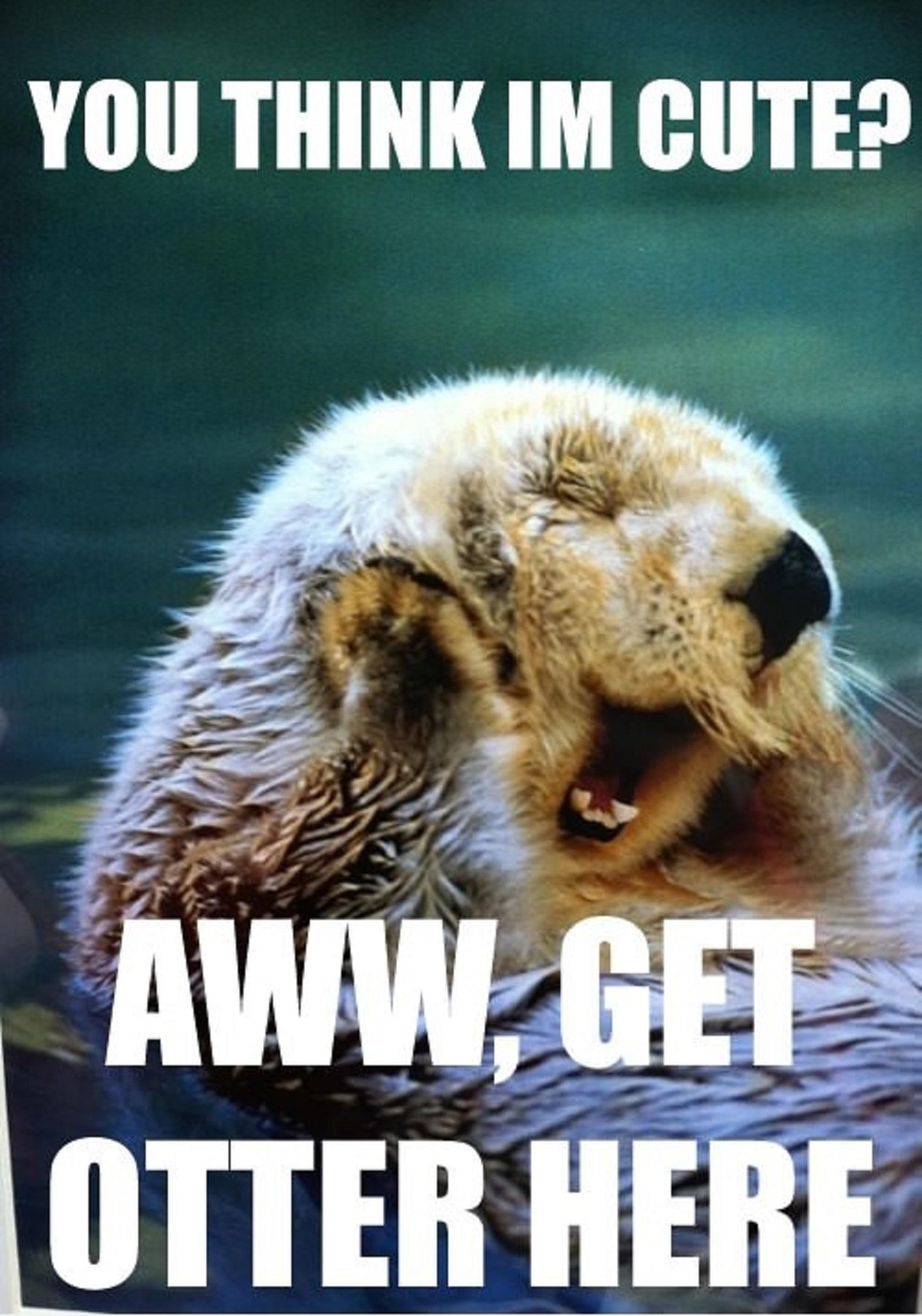 super funny animal puns you think i m cute get otter here   Animal I Love You Memes