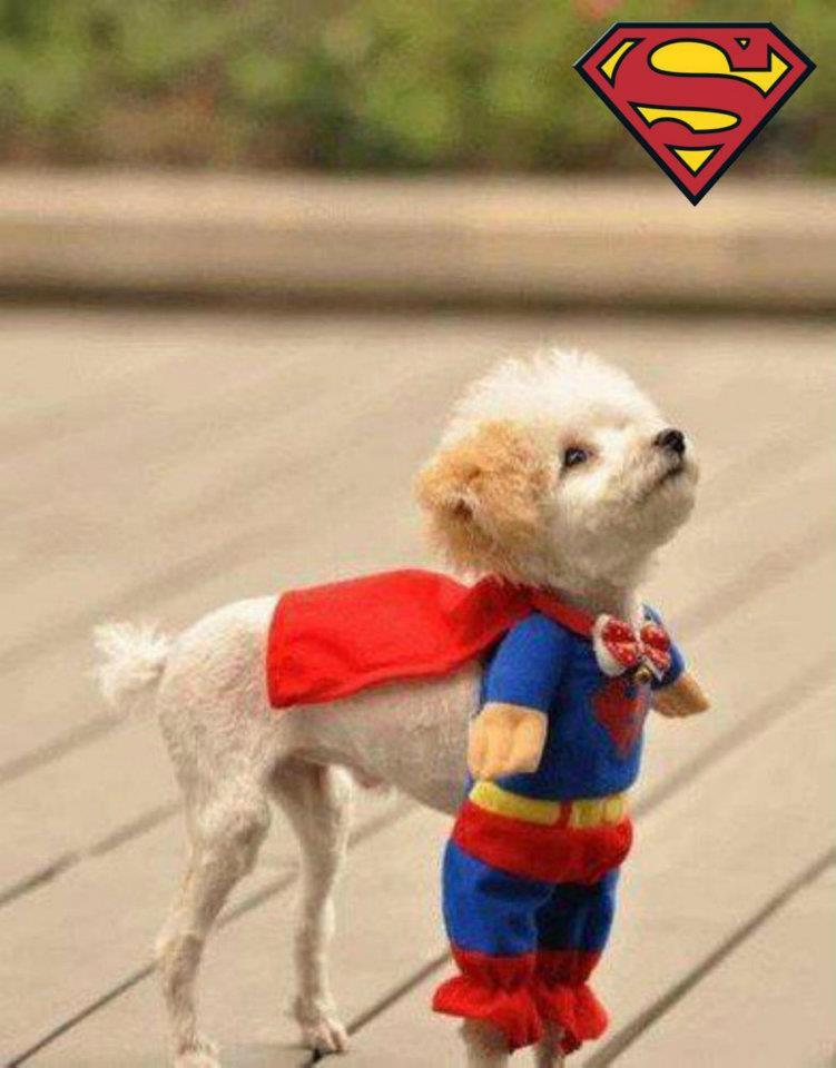 super funny dog in costumes dresses