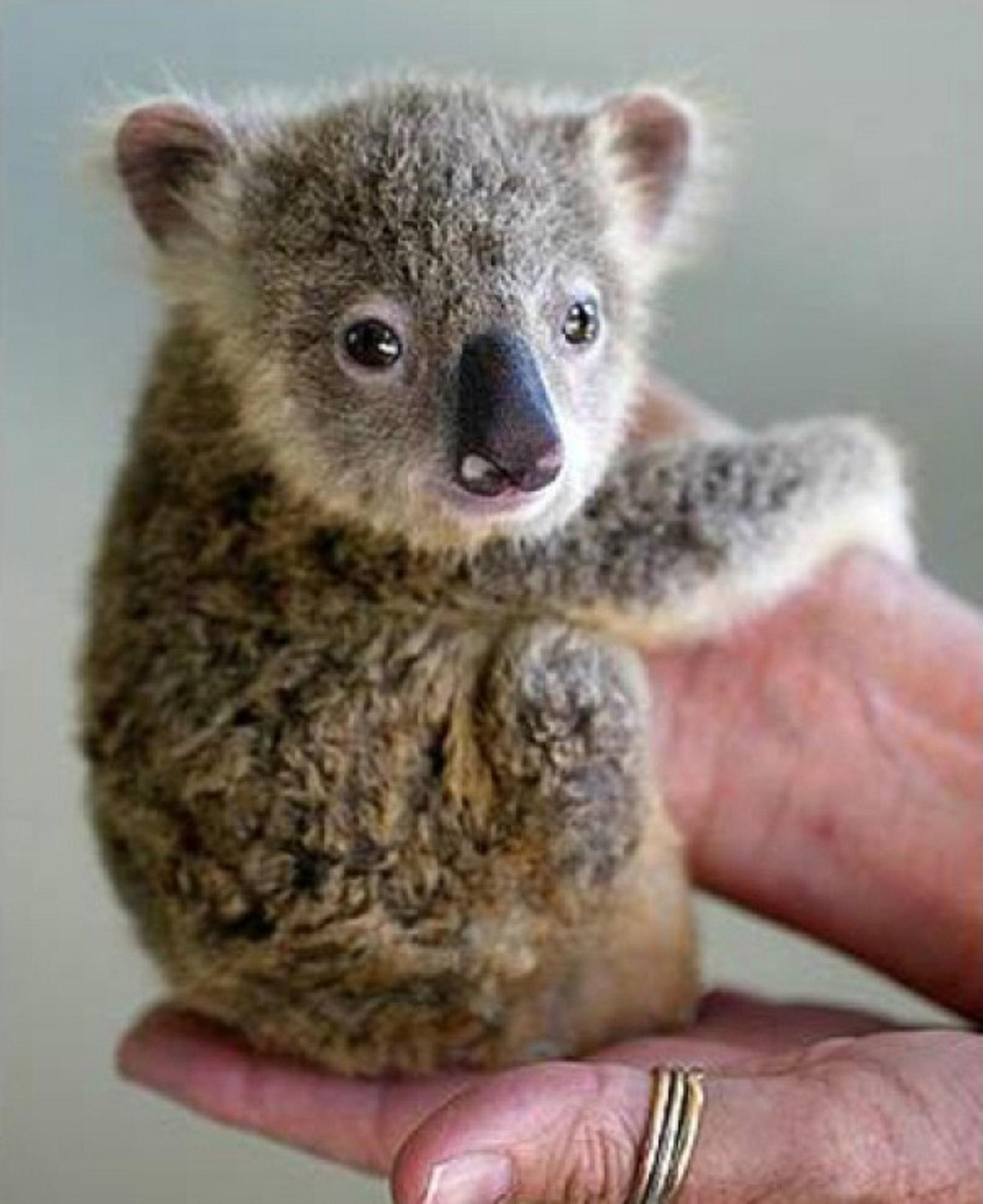 Top 10 Cutest Animals In The World 2014 - laughspark.com - photo#16
